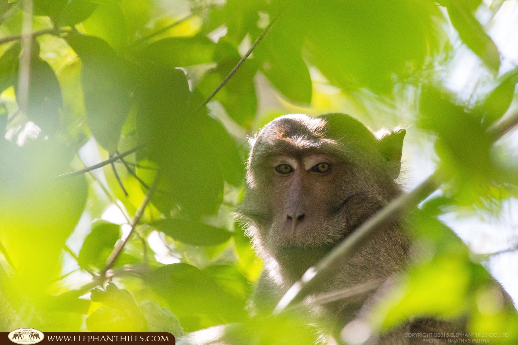 KHAO SOK National Park, Thailand - where nature meets adventure!