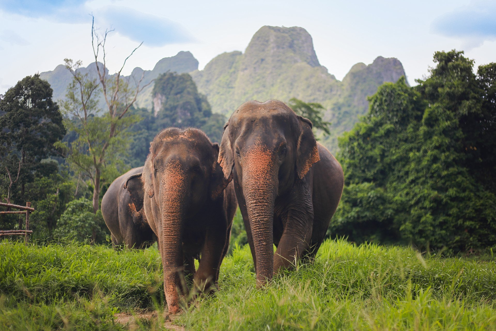 Asian elephant in the jungle on a tour of Khao Sok National Park.