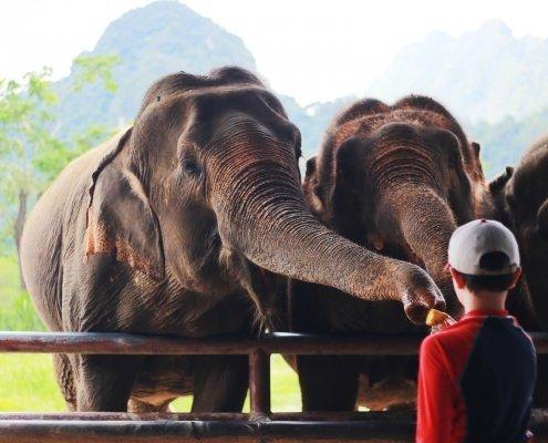 Elephant encounter / elephant experience on Elephant Hills tour in Khao Sok National Park
