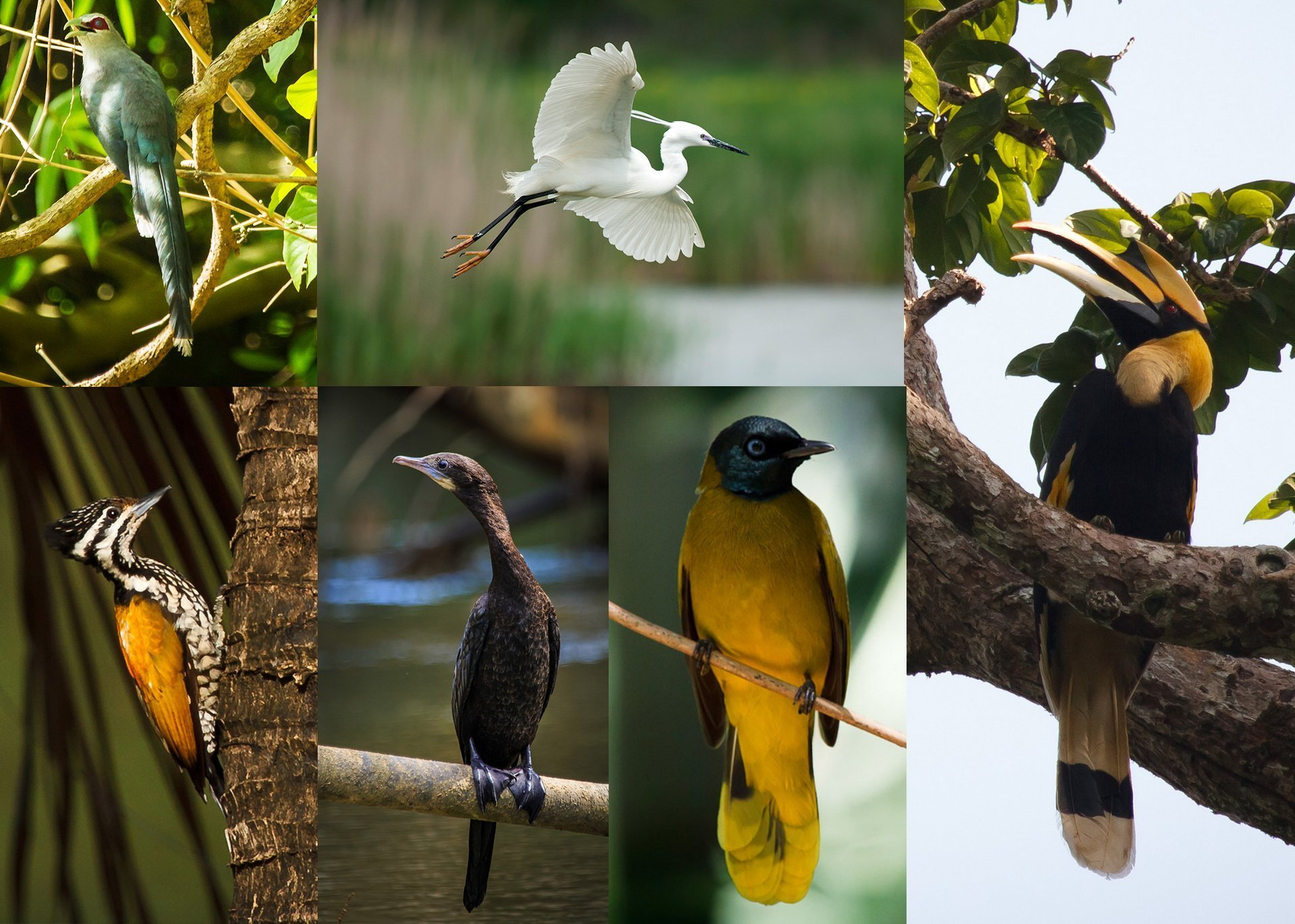 There are over 300 species of birds existing in Khao Sok National Park